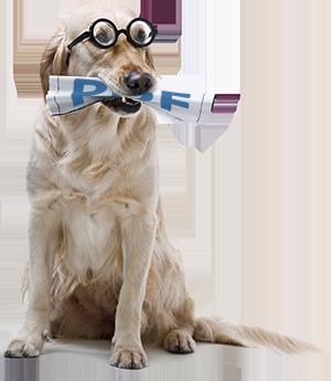 Dog with a PDF