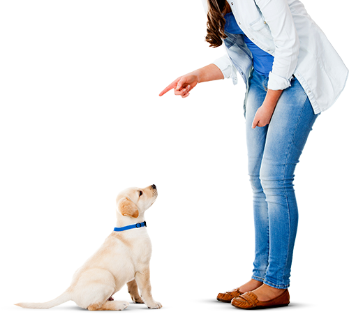 Woman training a Retriever puppy representing digital signage